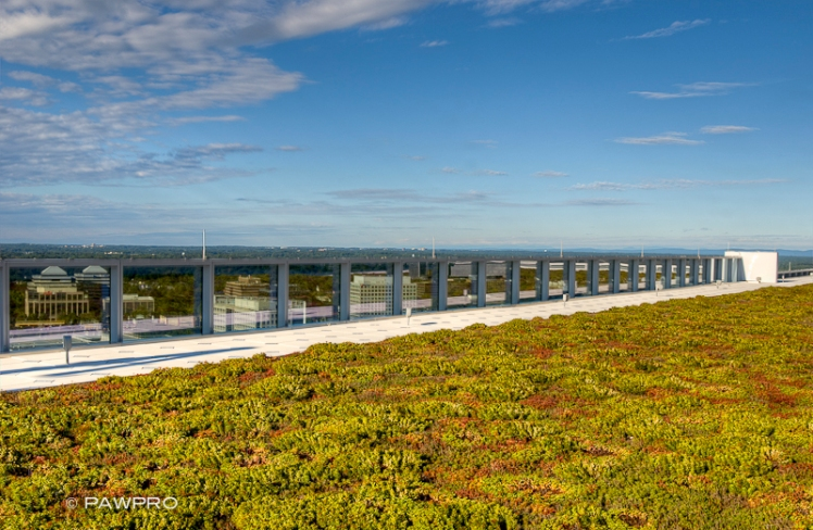 Rooftop greenery at Tysons Tower