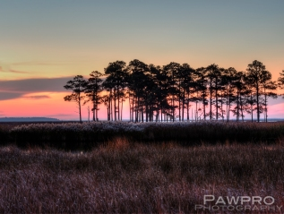 Exploring the Beauty of Blackwater National Wildlife Refuge: A Photo Essay
