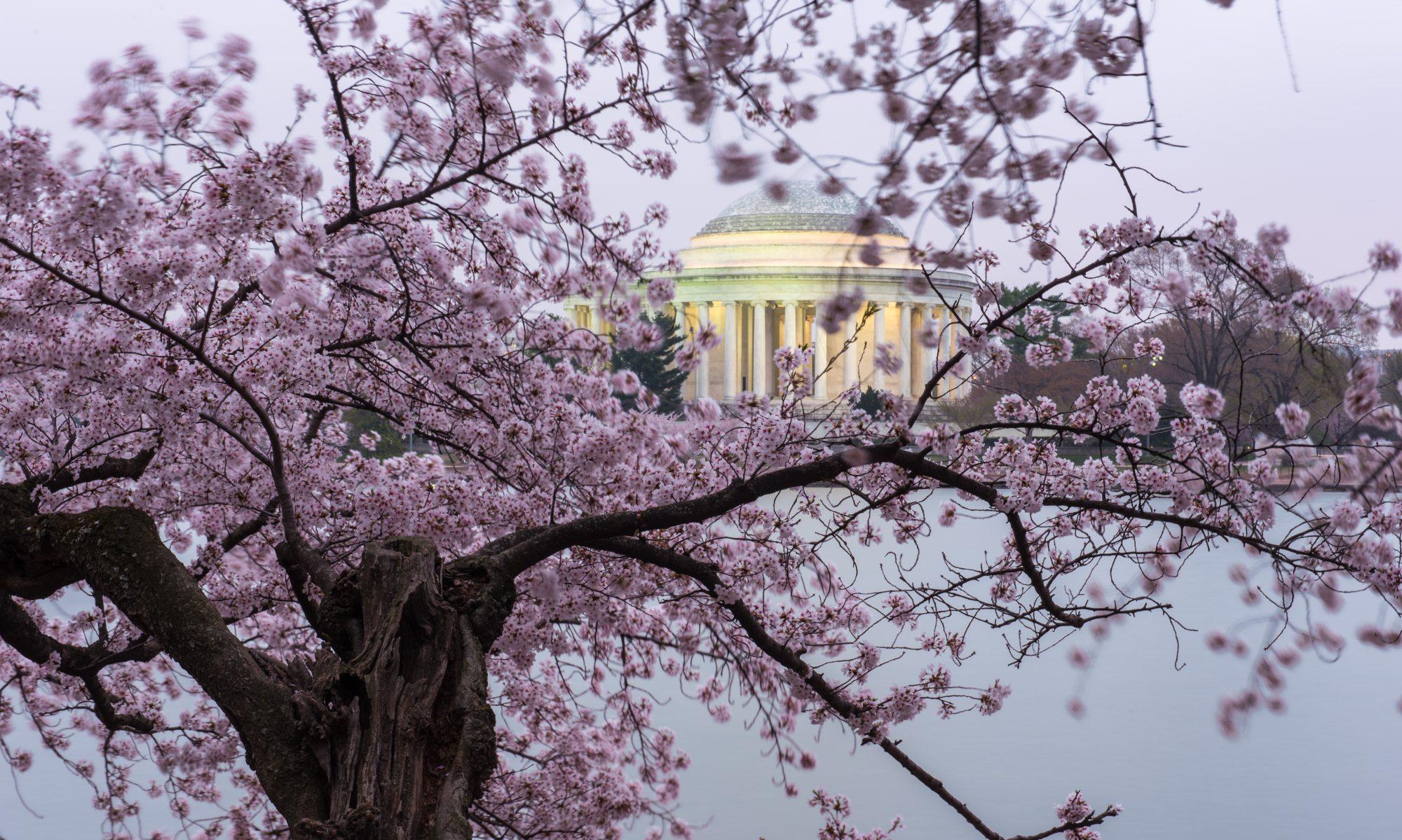 Photography and Video  Washington DC - Pawpro Media